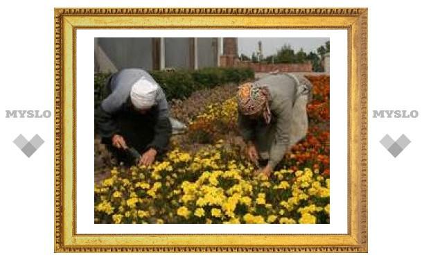 В Туле высадят по три цветка на человека