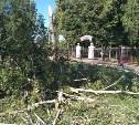 Сильный ветер повалил в Туле 25 деревьев