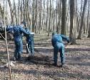 Тульские спасатели высадили в Центральном парке 80 молодых деревьев
