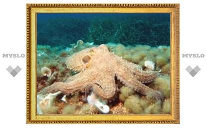 Найдены самые древние останки осьминогов
