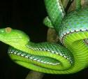 Туляков приглашают на День змей