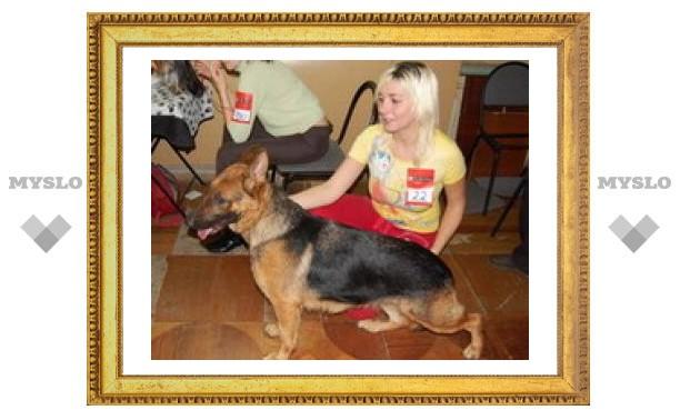 В Туле пройдут выставки кошек и собак