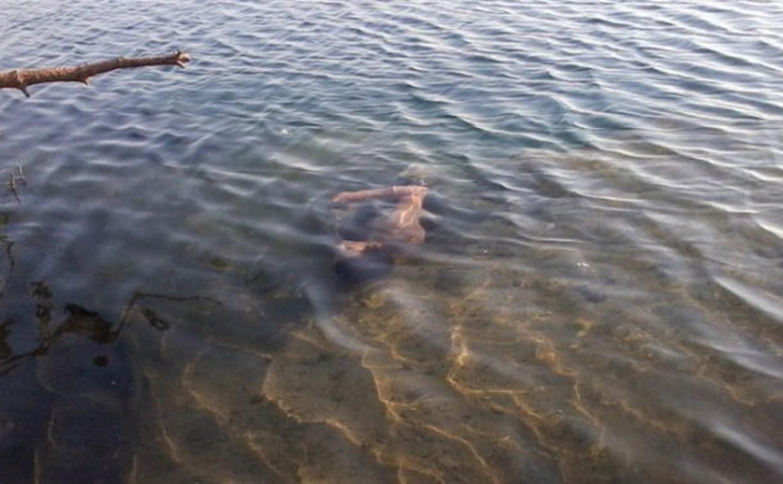 В Тульской области в пруду обнаружили труп