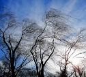 Метеопредупреждение: на Тулу идет сильный ветер