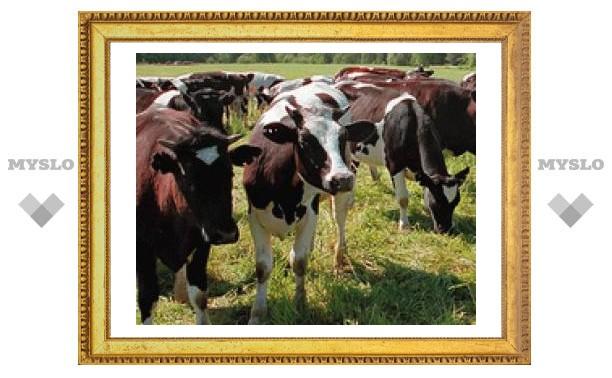 Развитие животноводства в Тульской области ускорят