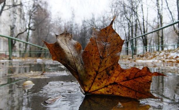 Погода в Туле 20 сентября: похолодание и небольшой дождь
