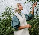 В тепличный экокомплекс в Щекино срочно требуются овощеводы