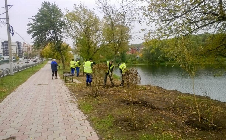 В Туле на улице Дмитрия Ульянова высадили ивы