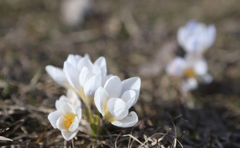 На выходных в Тульской области потеплеет до 14 градусов