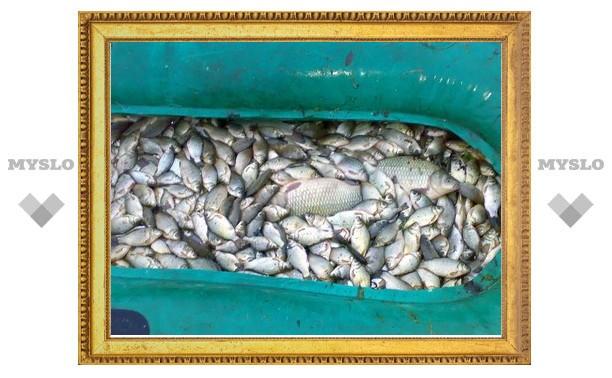 Жители Плавска рассказали о гибели рыбы в местной реке