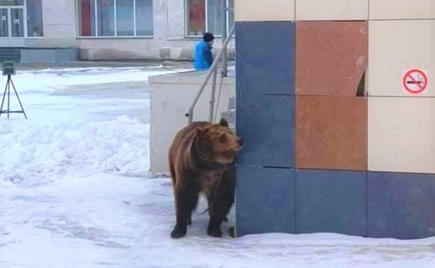 Привязанный медведь у школы на Калинина в Туле: новость оказалась фейком