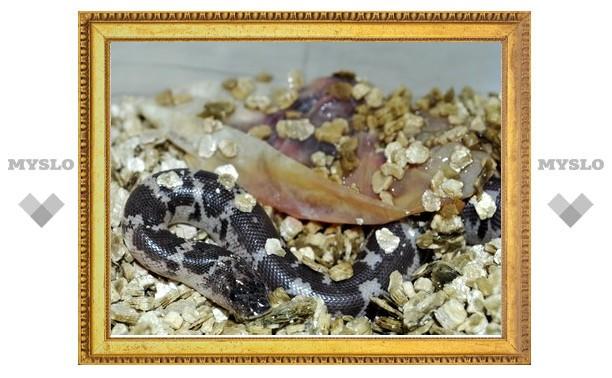 В экзотариуме родились уникальные змеи