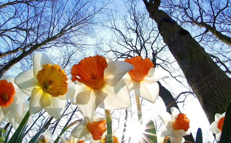 Погода в Туле 27 марта: до 17 градусов тепла, умеренный ветер и без осадков