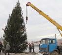 На набережной Упы установили 13-метровую живую ёлку