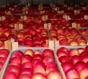 В Тульскую область пытались провезти 19,5 тонн польских яблок