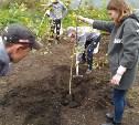 В Узловой на территории сквера восстановят березовую аллею
