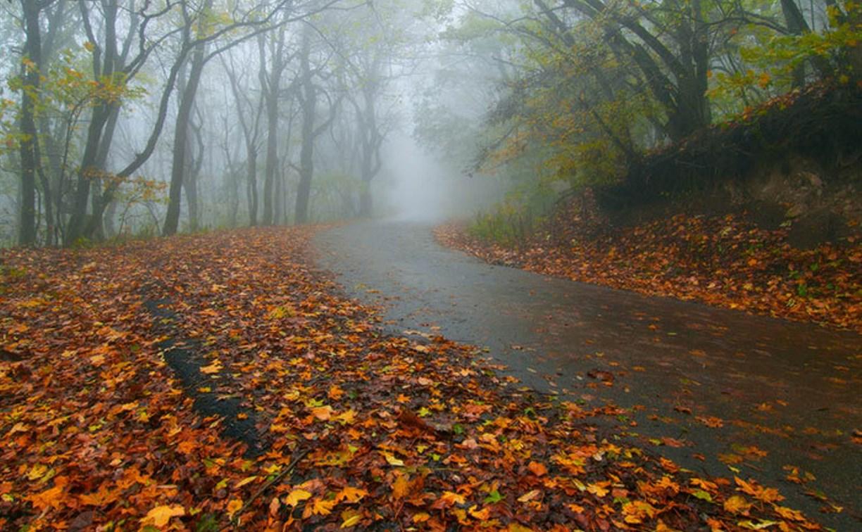 Погода в Туле 17 октября: облачно, дождь, до 13 градусов тепла