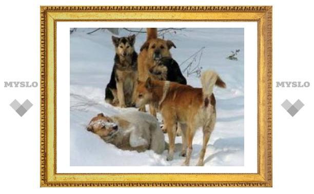 Туляки должны платить за отлов бродячих собак?