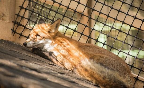 Тулякам предлагают взять под опеку животных из зооуголка Центрального парка