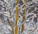Погода в Туле 25 января: малооблачно, до десяти градусов мороза