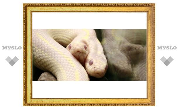 Уникальную змею привезли в Тулу всего на 10 дней
