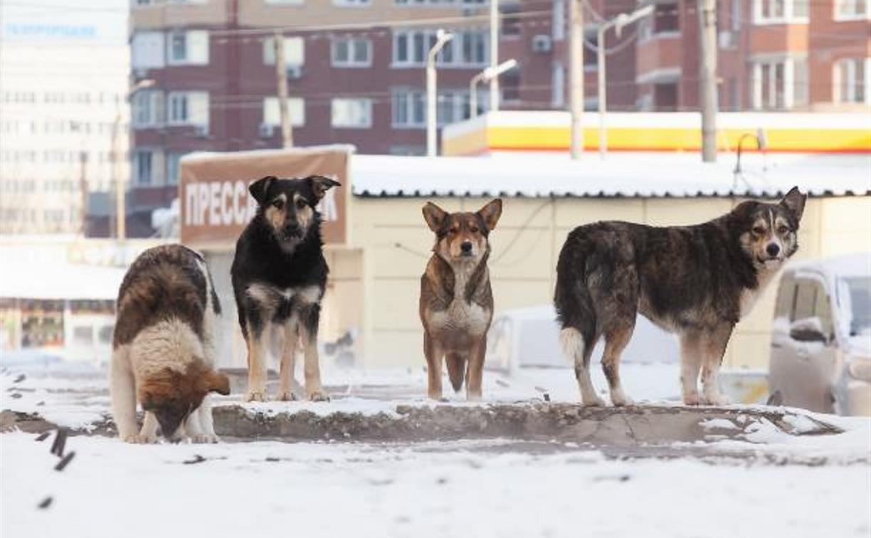 В Туле с начала года отловили более 140 бродячих собак