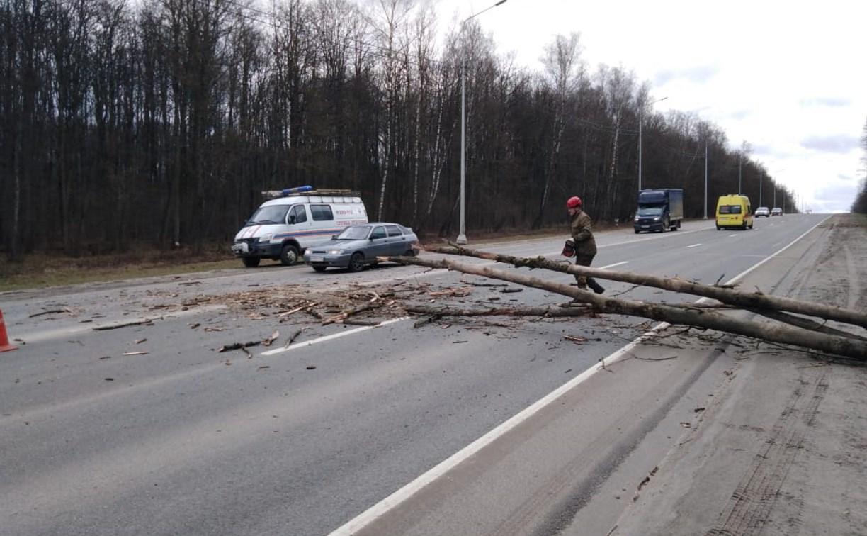 Сильный ветер повалил в Большой Туле 36 деревьев