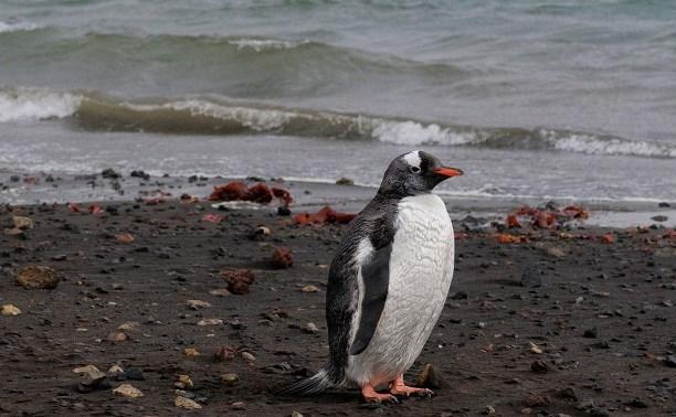 Туляки смогут окунуться в «Жаркое лето Антарктиды»