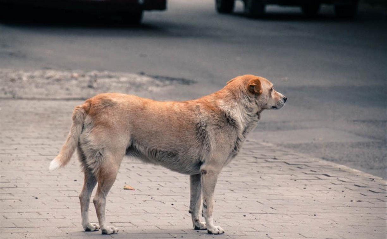 В Туле следователи начали проверку после публикации Myslo о нападении собаки на ребенка