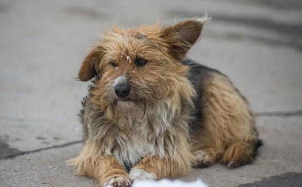 Активисты Венёва обвиняют ветеринара в массовом убийстве собак