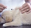 Весна – время прививок домашним животным