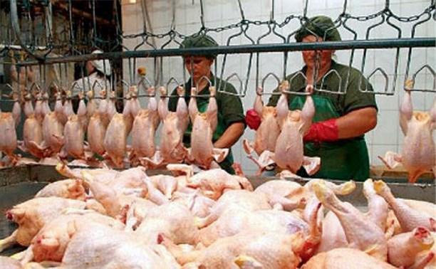 Россия ввела запрет на ввоз мяса птицы из США