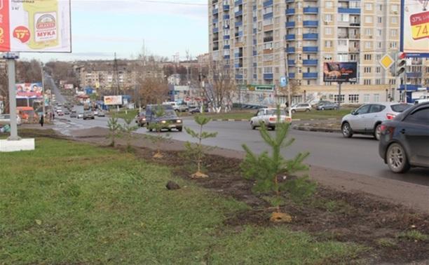 В Привокзальном районе высадят 100 сосен