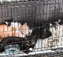 День кошек в «Макси»: эти питомцы ищут дом