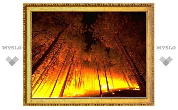 Площадь пожаров в России за сутки сократилась вдвое