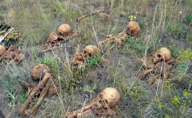 В Белевском районе найдены останки погибших солдат Красной Армии