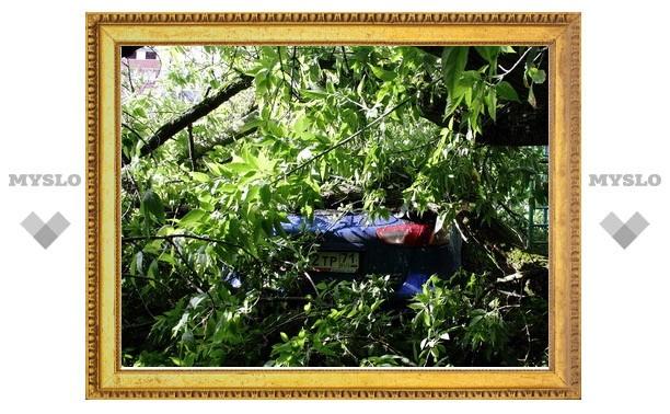 На машину туляка упало дерево
