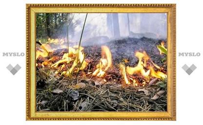 Лесам Тульской области присвоили пожароопасный класс