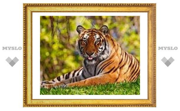 4 октября: День защиты животных