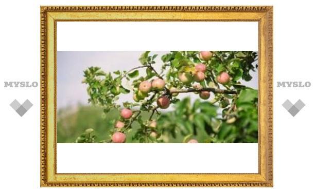 Под Тулой будет элитный яблоневый сад