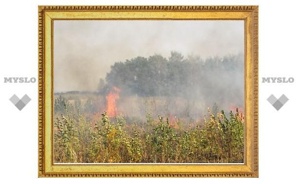 В Тульской области лесных пожаров не зарегистрировано