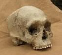 Обнаруженный на тульском заводе череп мог стать экспонатом или деталью интерьера