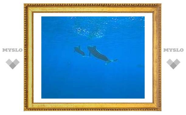 На дельфинов прекратят охотится из-за ртути