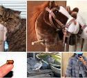 Лошадь на палочке, кряхтящий кот и дикие утки: что сдают в аренду туляки?