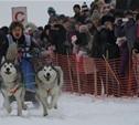 На Куликовом поле прошли гонки на собачьих упряжках