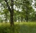 Погода в Туле 22 августа: до +23 градусов, облачно, кратковременный дождь