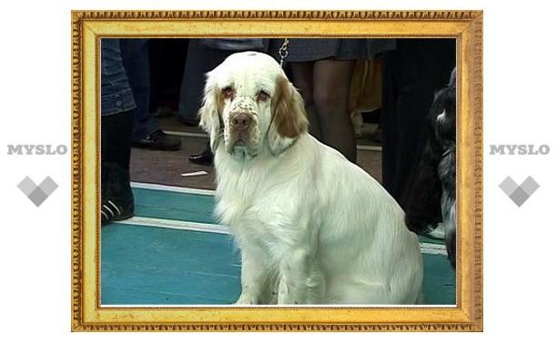 Новомосковская собака стала лучшей