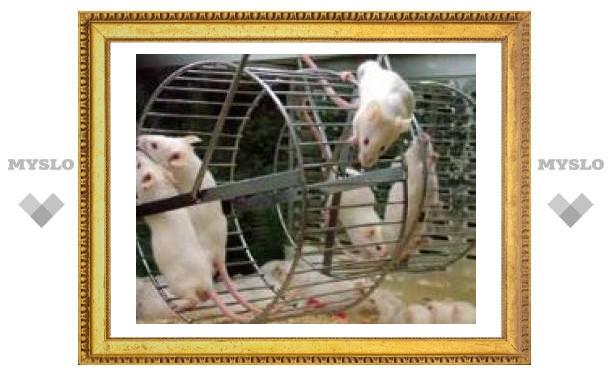 Японские ученые клонировали замороженных мышей