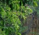 Погода в Туле 14 июня: облачно, дождливо и прохладно