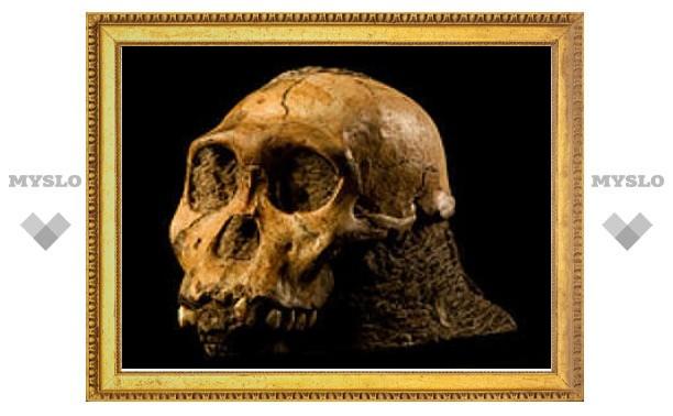 """Палеонтологи усомнились в новом """"недостающем звене"""" эволюции человека"""